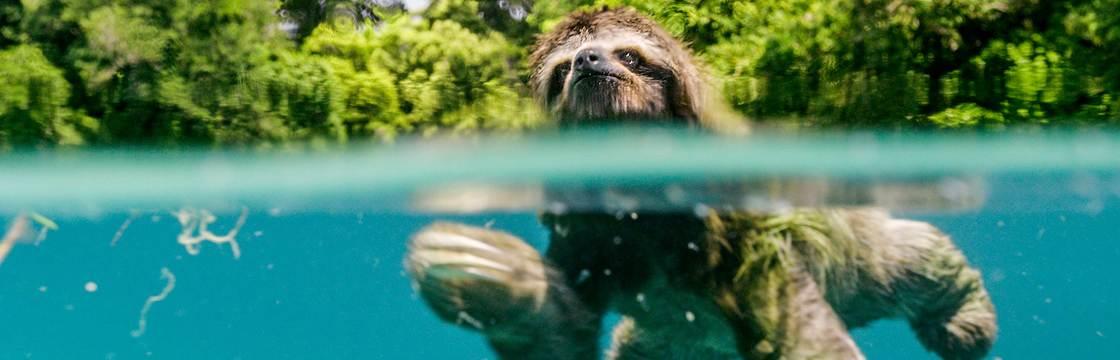 Le meraviglie della Natura al cinema con Earth – Un giorno straordinario